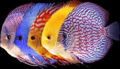 fishtop50.com